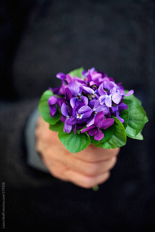 Detail of woman's hand holding a wild violets bouquet by Laura Stolfi for Stocksy United