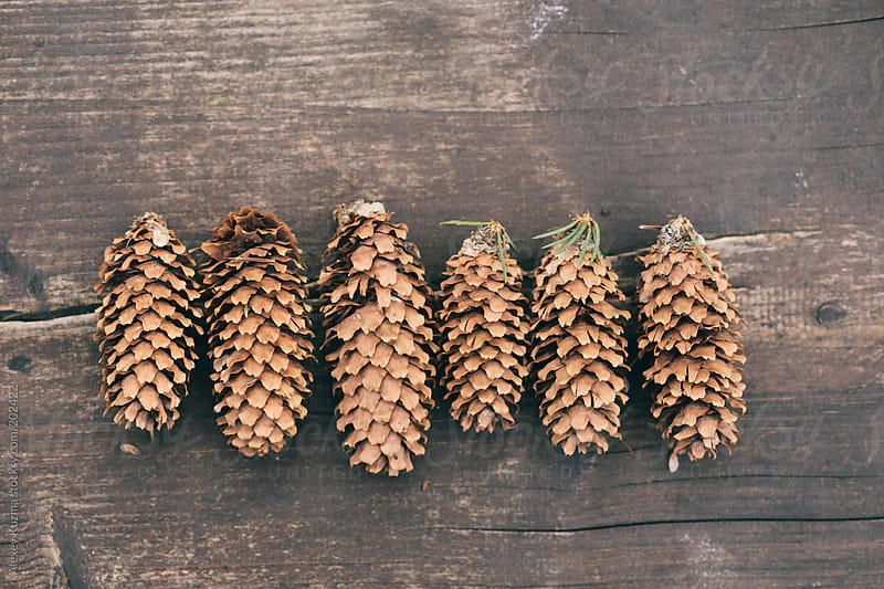 pine cones by Alexey Kuzma for Stocksy United