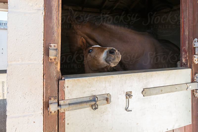Foal in his stable by Marilar Irastorza for Stocksy United