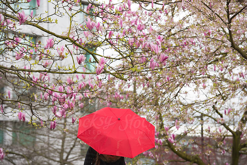 Person With Red Umbrella Amongst Pink Spring Blossoms by Ronnie Comeau for Stocksy United