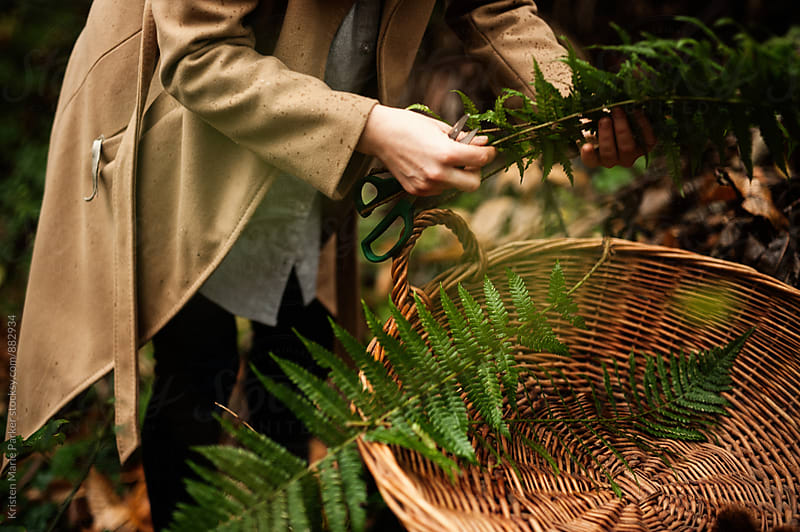 Woman cuts ferns and foliage to place in wicker basket by Kristen Marie Parker for Stocksy United