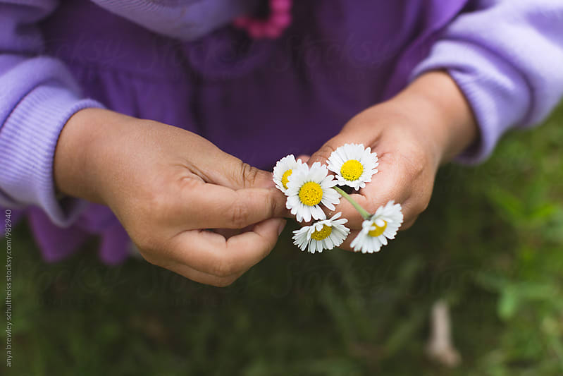 Closeup image of a young girl picking and holding white and yellow dandelion flowers by anya brewley schultheiss for Stocksy United