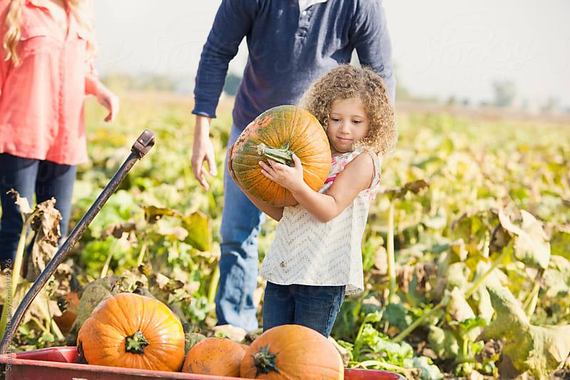 Pumpkins: Girl Has Wagon Full Of Pumpkins by Sean Locke for Stocksy United