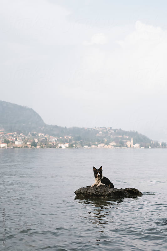 Dog on the rock in the lake by Simone Becchetti for Stocksy United