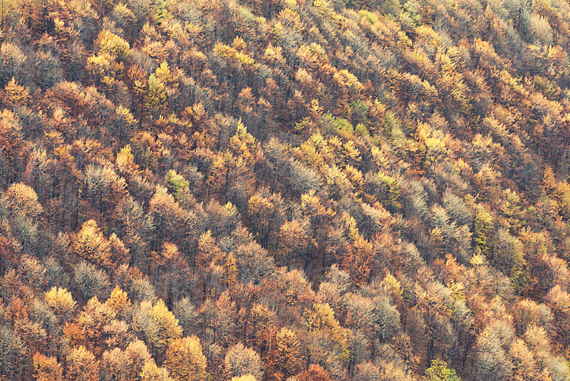 Aerial view of forest in fall by Pixel Stories for Stocksy United
