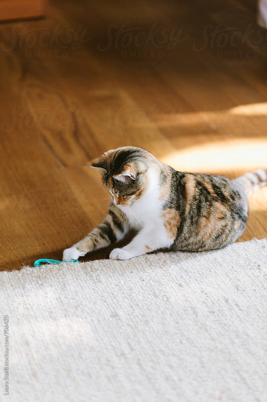 Cat grabbing an hair band while laying on living room floor by Laura Stolfi for Stocksy United