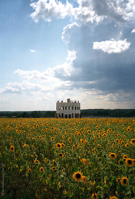 Architectural construction in sunflowers field by Dina Lun for Stocksy United