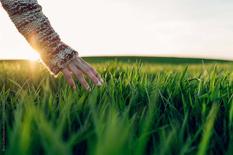 Young woman touching straws in the green fields and sunset moment by Jordi Rulló for Stocksy United