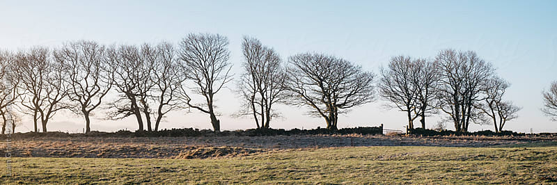 Row of trees beside a drystone wall. Derbyshire, UK. by Liam Grant for Stocksy United