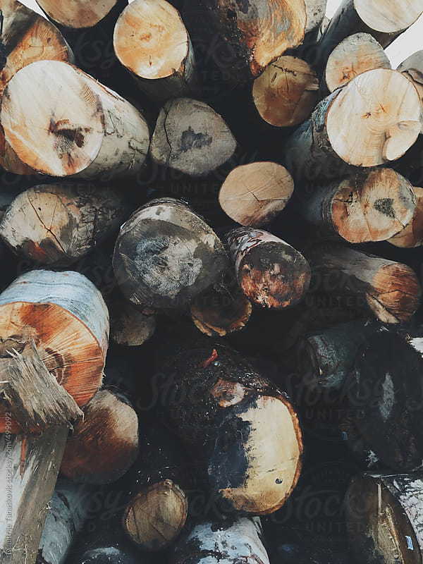 Tree trunks in front of wood processing plant by Dimitrije Tanaskovic for Stocksy United