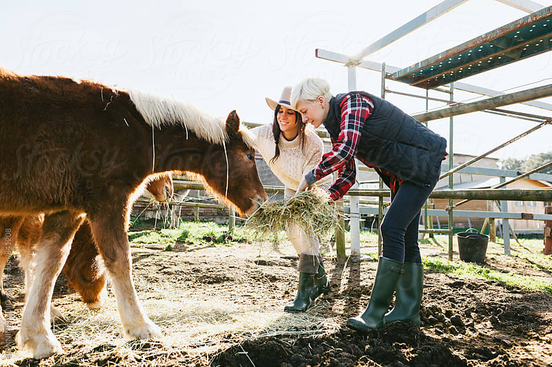Women farmers feeding ponies on farm. by BONNINSTUDIO for Stocksy United