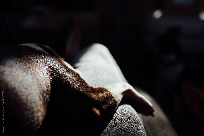 a little dog's leg draped over a woman's leg by Sarah Lalone for Stocksy United