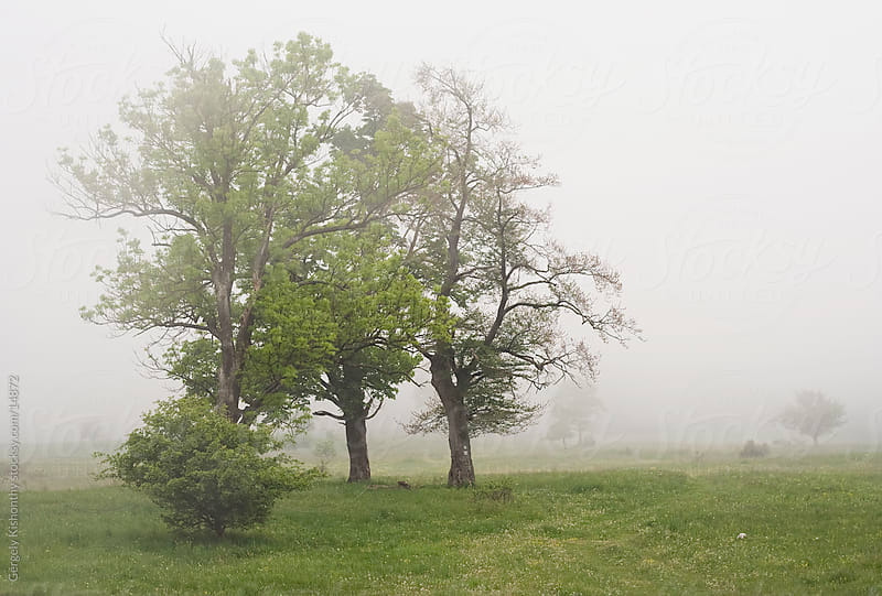 Fog rolling over trio of trees. by Gergely Kishonthy for Stocksy United