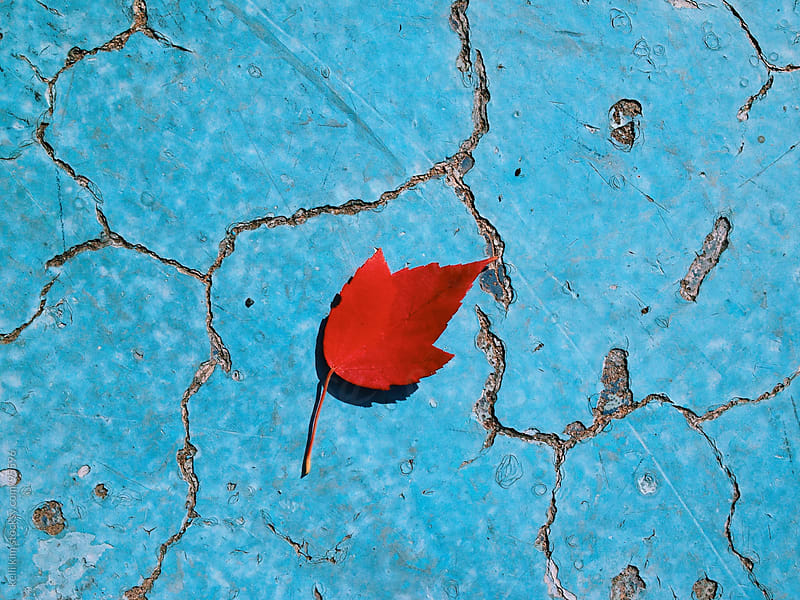 Fallen Red Leaf In Empty Blue Pool by kelli kim for Stocksy United
