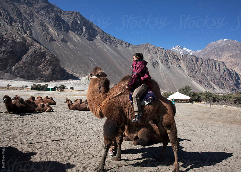 A tourist enjoy two humped Bactrian camel ride in Nubra Velly,Ladakh,India by PARTHA PAL for Stocksy United