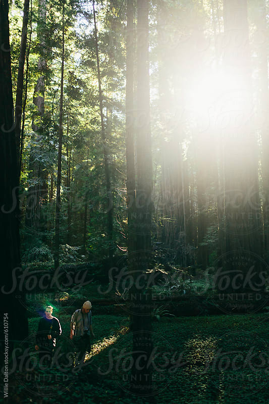 A Young Man and Woman Hike through a Redwood Forest by Willie Dalton for Stocksy United