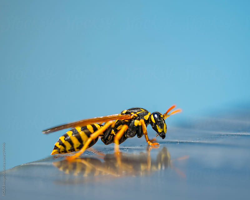 paper wasp by RG&B Images for Stocksy United