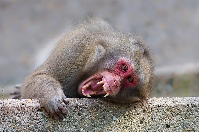 Monkey by Gabriel Ozon for Stocksy United