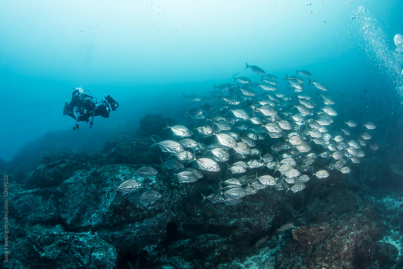 A underwater photographer shooting  a school of Jack fishes in the blue water of the ocean by Song Heming for Stocksy United