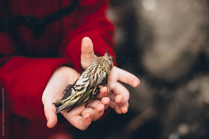 Little Hands hold a Dead bird by Amanda Voelker for Stocksy United