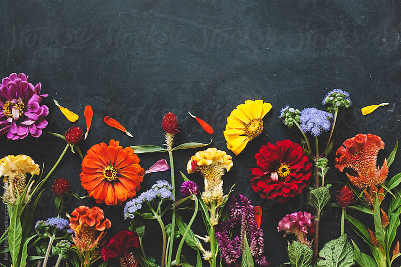 horizontal image of colorful flowers on a chalkboard background by Kelly Knox for Stocksy United
