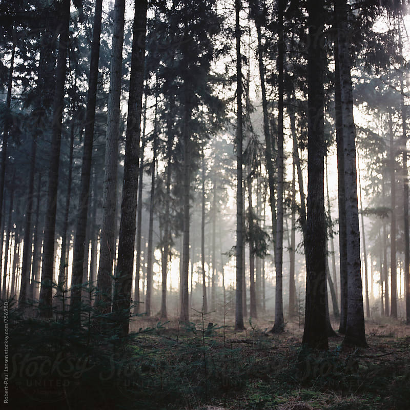 Misty Forest by Robert-Paul Jansen for Stocksy United