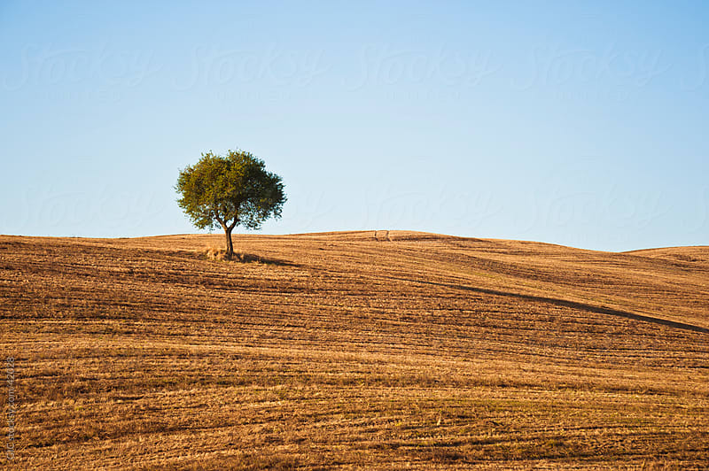 Tree in empty field by GIC for Stocksy United