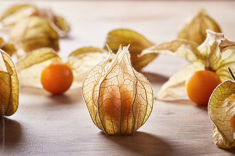 Close-up of closed physalis fruit by Martí Sans for Stocksy United