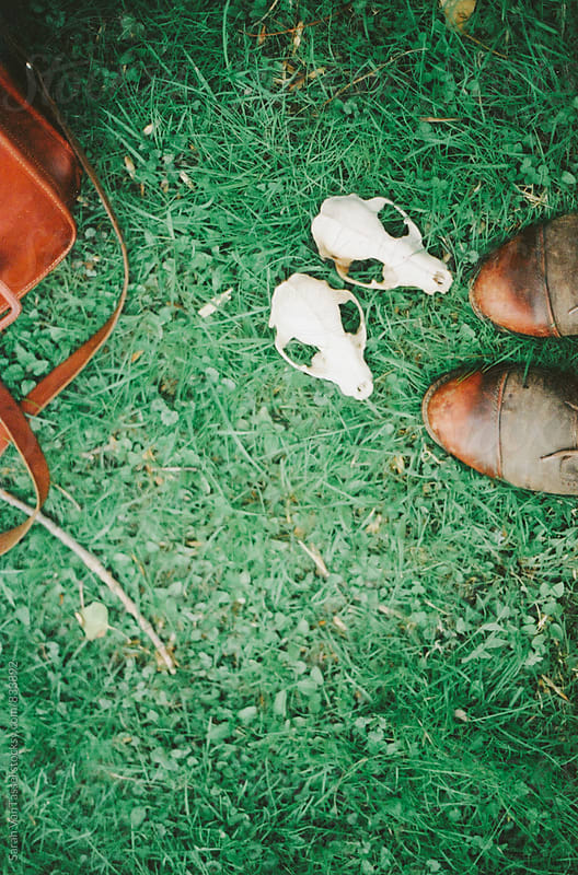 Raccoon Skulls on the Grass. by Sarah VanTassel for Stocksy United