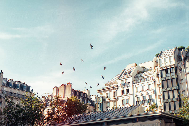 Birds flying in Paris by Kara Riley for Stocksy United
