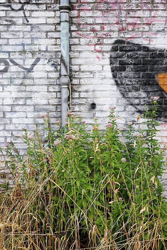 weeds and wall with graffiti by Marcel for Stocksy United