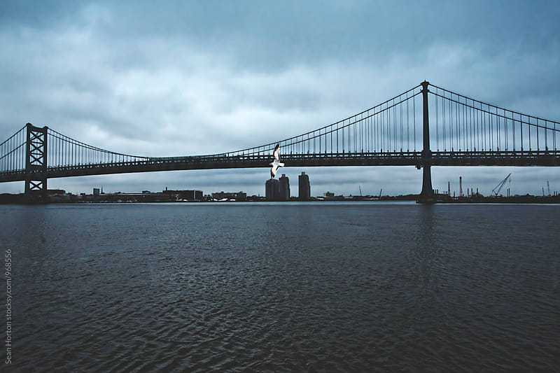 Benjamin Franklin Bridge and Seagull by Sean Horton for Stocksy United