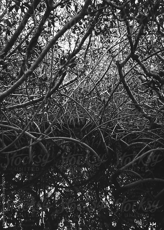 Mangroves Roots in Black and White by Stephen Morris for Stocksy United