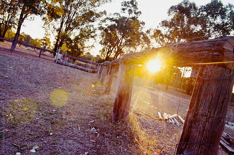 rural farm fence, Australia by Gillian Vann for Stocksy United