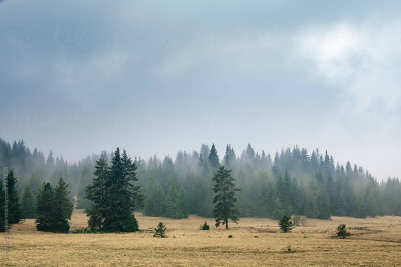 Forest surrounded by fog and mist by Borislav Zhuykov for Stocksy United