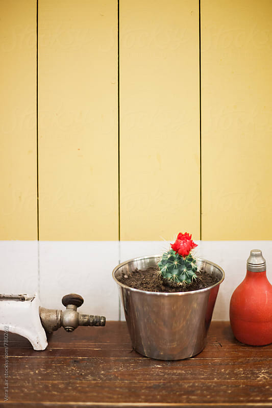 Cactus and small plastic bottle in front of a yellow wall by Vera Lair for Stocksy United