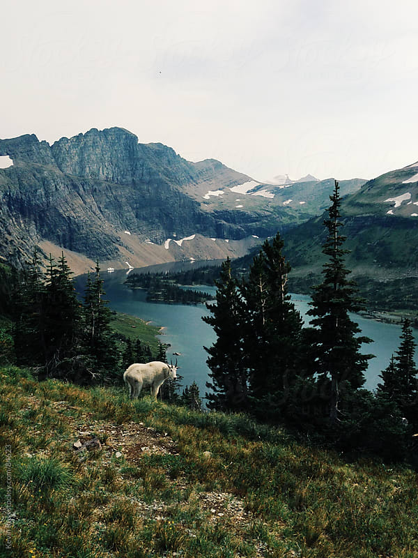 Mountain Goat and Lake by Kevin Russ for Stocksy United