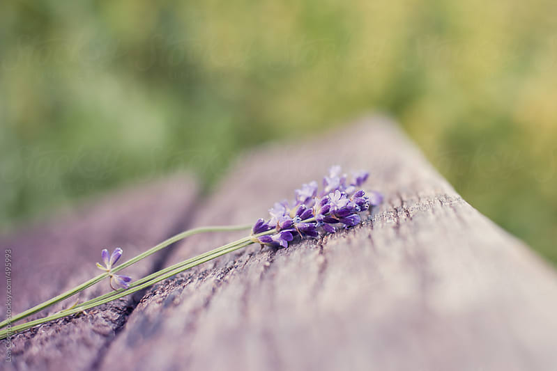 A small bunch of lavenders laying on an old bench by Lea Csontos for Stocksy United