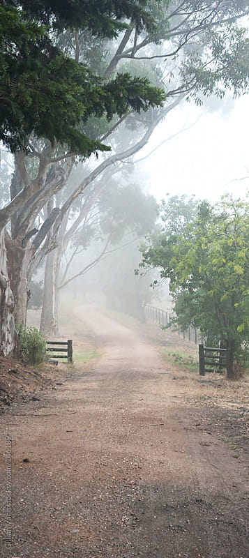 misty driveway by Gillian Vann for Stocksy United