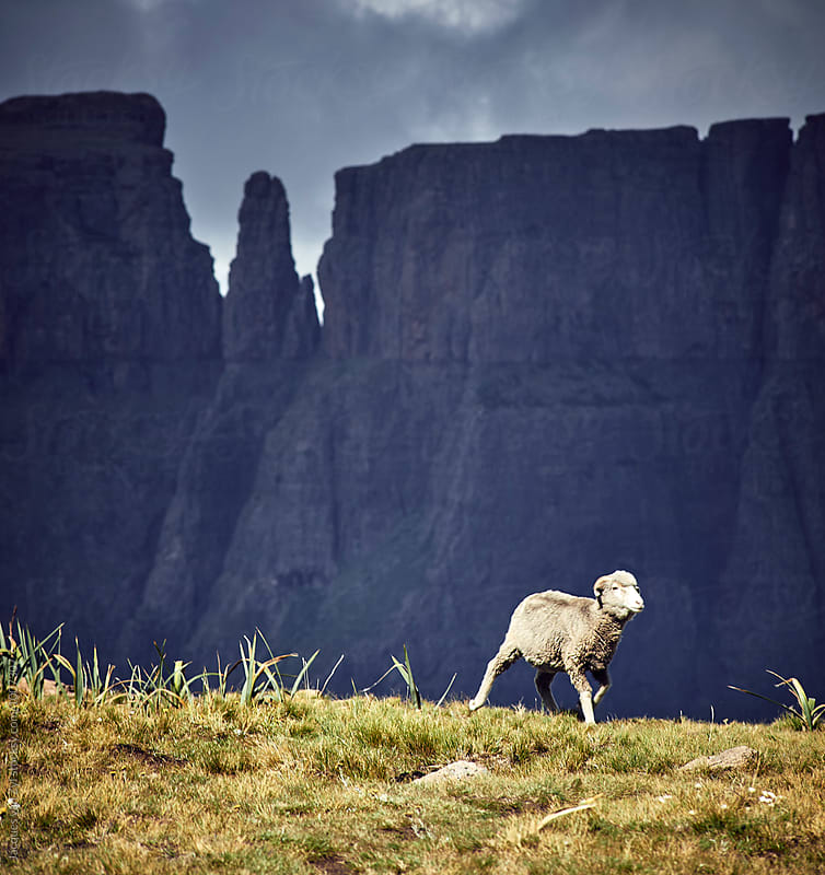 A horned sheep running in front of a dark stormy mountain. by Jacques van Zyl for Stocksy United