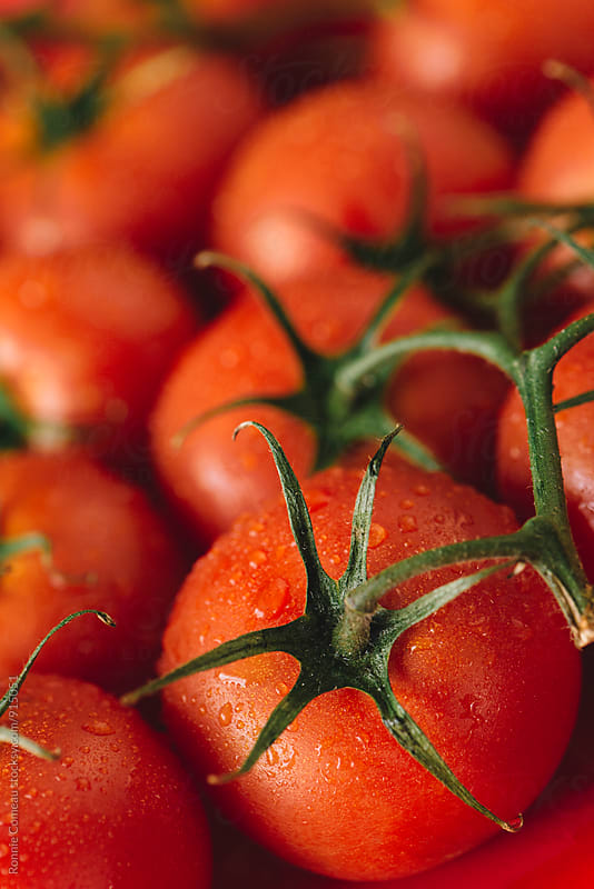 Fresh Washed Tomatoes by Ronnie Comeau for Stocksy United