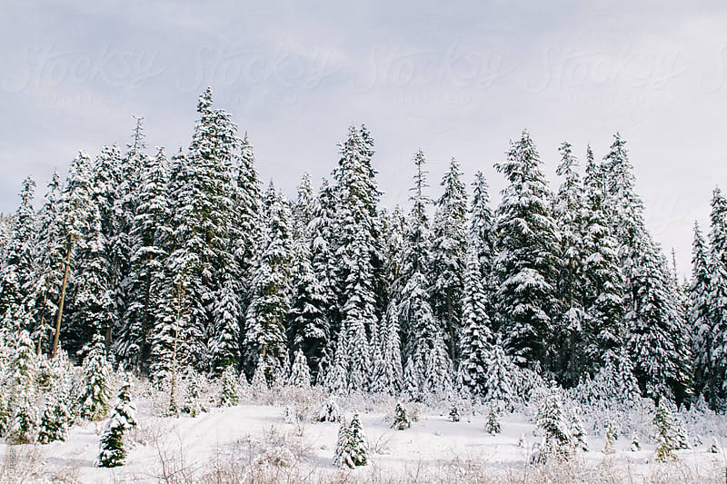 Snow covered mountain winter scenes by Jesse Morrow for Stocksy United