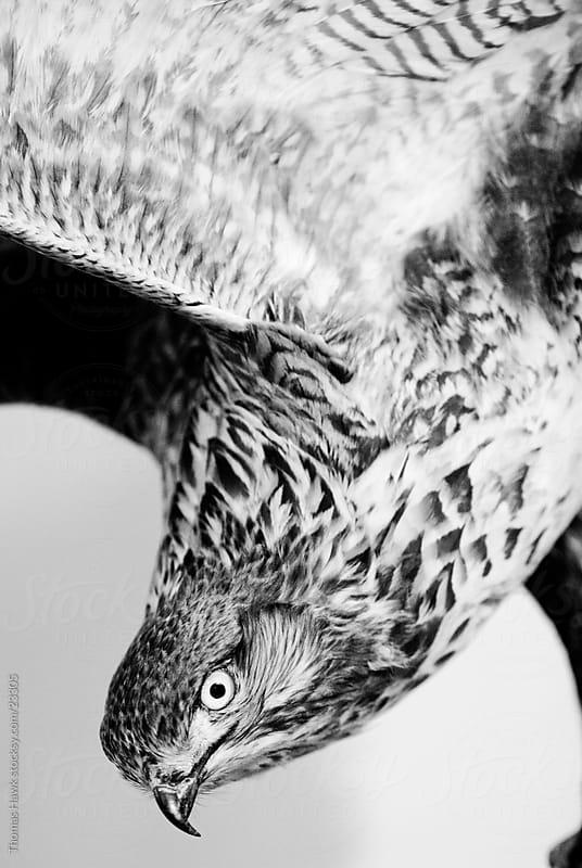 Stuffed Bird by Thomas Hawk for Stocksy United