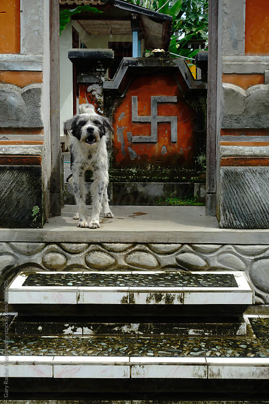 Dog barking at Temple Entrance in Bali by Gary Radler Photography for Stocksy United