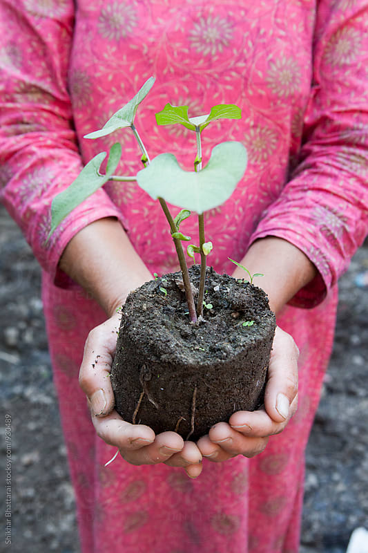 Hand of a woman holding a young sapling. by Shikhar Bhattarai for Stocksy United