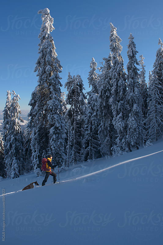 Skier going uphill through the woods by RG&B Images for Stocksy United