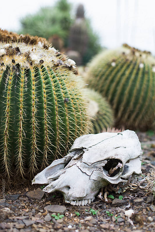 Cactus Skull by Gary Parker for Stocksy United