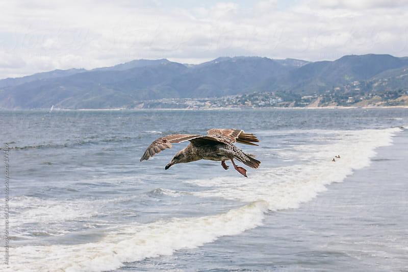 Seagull flying over a beach by Alejandro Moreno de Carlos for Stocksy United