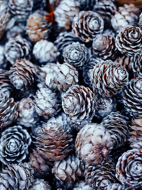 decorative pine cones by Photographer Christian B for Stocksy United