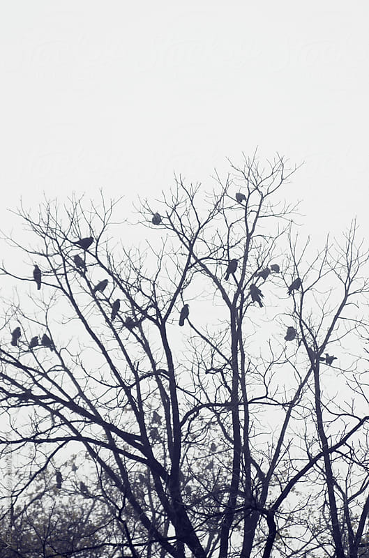 Lots of birds on branches of trees in the fog by Marija Anicic for Stocksy United